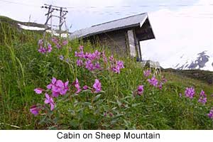 Cabin on Sheep Mountain Alaska